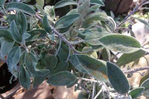 צמחי מרפא הם מתנה מהטבע לבריאות שלמה